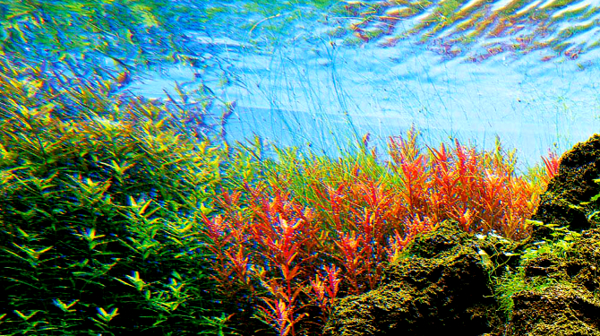 Aquaristas contam com nova rede social